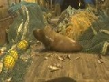 Angry Sea Lion Caught In Fishing Nets