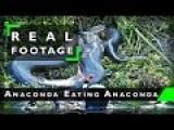 Anaconda Ate Anaconda