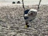 Adorable Dogs Like To Play On Swing Set