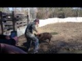 A Piglets Angry Mother - Redneck Backs-Down