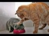 Animals Can Be Jerks - Supercut Compilation 2013!