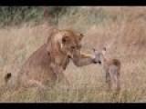 Amazing Video Magic Of Uganda
