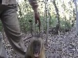Angry Monkey Goes Straight For The Camera