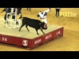 Angry Bull Executes The Perfect Piledriver