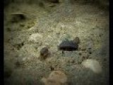 A Pill Bugs Family, Short Film
