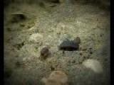 A Pill Bugs Family, Short Film