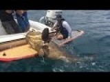 Amazing Huge 7ft Grouper Caught On A Paddle Board