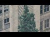 Agitated Man Climbs Atop 80-foot Tree In Downtown Seattle