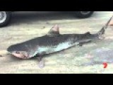 A Great Grandfather Explains Why He Took A Dead Shark Home Strapped To The Front Of His Car