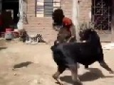 Amazing Fight Coq Vs Dog