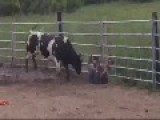 Amateur Bull Fighter Gets Wrecked