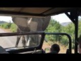 Arnold Schwarzenegger Encounters Elephant In South Africa