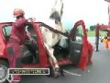 Accident Between Horse And Car