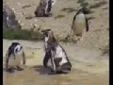 Awesome Penguin Dance