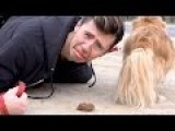 Australian Man Eats Dog Poo