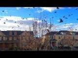 A Starling Murmuration Hundreds Of Birds
