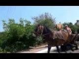 A Dog Riding A Horse