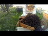 Beehive Autopsy - Odd Beehive Design