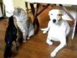BIRD FEEDS CAT & DOG