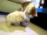 Baby Dog Want To Cat Food. So Funny Fight! So Cute!
