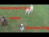 Business Dog Versus Government Dog
