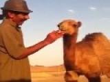 Baby Camel Smoking Cigarette