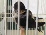 Baby Bird Takes A Tiny Tumble