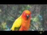 Beatbox Duet With A Bird