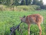Bambi And A Gun