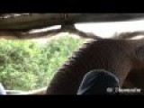Big, Hungry Elephant Scares The Crap Out Of Tourists Inside A Vehicle