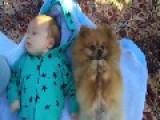 Baby Meets Pomeranian In Cuteness Overload