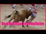 Best Bull Attacks Compilation