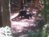 Bear Killed With Crossbow