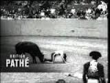 Bull Fighting In San Francisco 1955