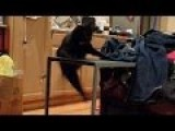 BIGGEST CAT FAIL OF ALL TIME