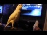 Bird Dancing To Old School Hip Hop 5 On It