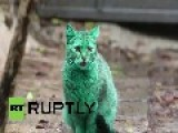 Bulgaria: Mysterious GREEN CAT Baffles Varna Residents