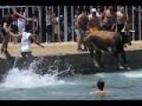 Bulls Struggling In Water During Spanish Bous A La Mar Fiesta