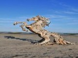 Beautiful Driftwood Sculptures