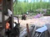 Bear Cubs In Camp Isn't Good