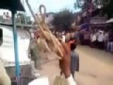 Bull Jumps Clean Over Guys Head In The Middle Of The Street