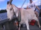 Best Of Gary The Goat 2014