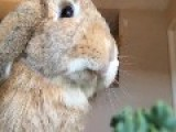 Bunny Eating In Slow Motion