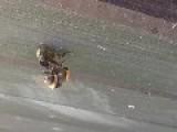 Bee Porn!