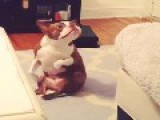 Belly Dancing Puppy