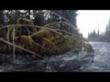 Brown Bear Hunt In Yakutat Alaska