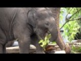 Baby Elephant Lily's First Year In 2 Minutes