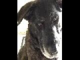 Bailey The Dog Is Self Aware