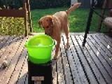 Buddy The Dog Enjoys Automatic Fetch Machine Tremendously