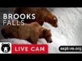 Brooks Falls - Katmai National Park, Alaska Live Bear Cam